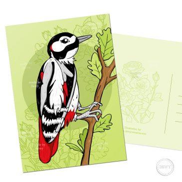 Specht postkaart Nederland postcrossing